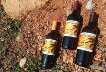 A Trieste torna Mare & Vitovska, per celebrare il celebre vitigno locale