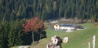 Una bella estate in Trentino con Albeinmalga