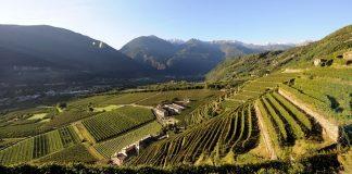 I colori dell'autunno nella Media Valtellina