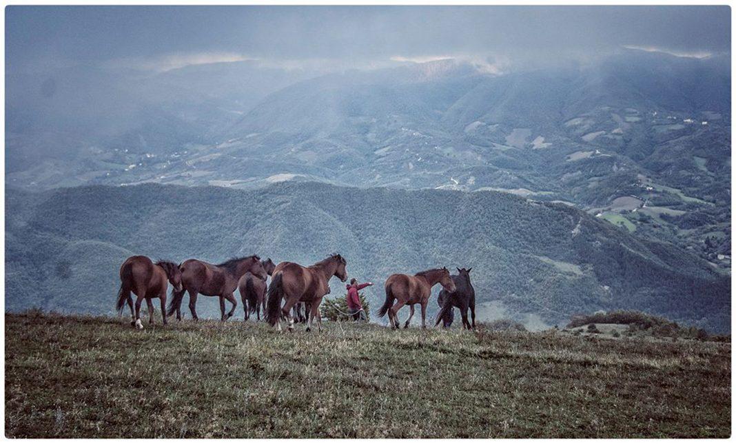 Il Grand Tour delle Marche arriva a Cantiano per la Fiera Cavalli