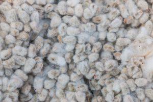Prodotti tipici locali: Il pane di cotone