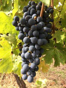 Modigliana presenta il suo territorio e i suoi nuovi vini