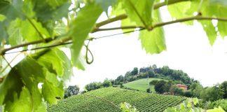 New York, Los Angeles e Monaco di Baviera brindano con i Vini di Romagna