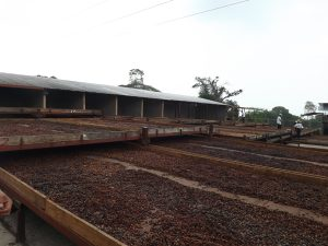Il Cacao Maracaibo, dal Venezuela al SANA di Bologna