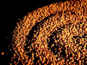 Le lenticchie di Onano, quelle amate dai Papi del
