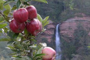 In Val di Non riecco Pomaria, la festa della mela, del raccolto e dell'incontro