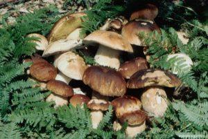 Dopo il secco dell'estate, riparte un po' in sordina la stagione dei funghi