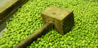 Torna il tempo della Sagra de la Volìa Cazzata, tra pizzica e tradizione