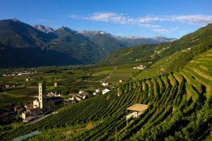 """I grandi vini della Valtellina: lo """"Sfurzat"""", Sforzato Docg, un passito di gran carattere"""