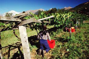 Vins Extrêmes 2017 ad Aosta, un successo per le aziende valdostane