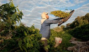 Barista&Farmer, un ponte culturale tra Colombia e Italia
