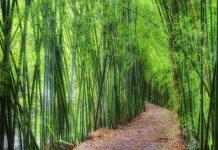 In Italia cresce il business del bambù, che sbarca nella GDO