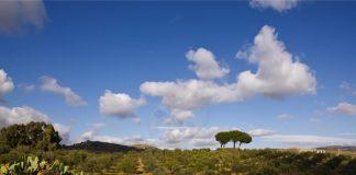 Frantoi Berretta, le tradizioni di una terra e le sue storie millenarie