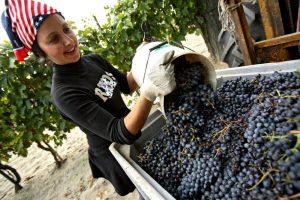 Emilia-Romagna a tutto campo: il vino come il calcio