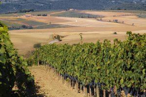 Apre a Roma Vigneto Italia, il primo giardino dei vini di casa nostra