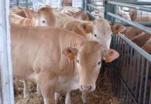 Lombardia Carne, gusto e tradizioni tornano alla storica fiera di Rovato