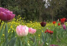 Comincia Giardinity a Villa Pisani di Vescovana nel padovano