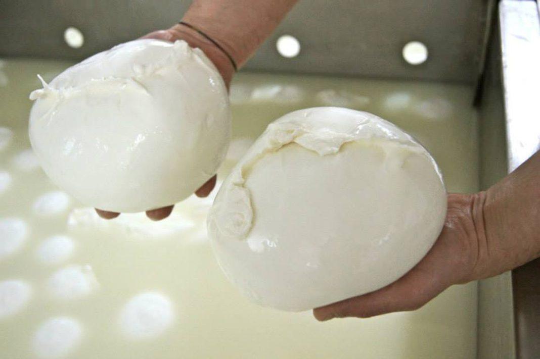 La mozzarella di bufala campana Dop protagonista per i 40 anni di San Patrignano