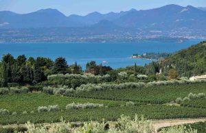 Anteprima Chiaretto a Lazise: il rosé delle due riviere del lago di Garda