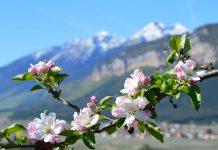 Sport, natura e gastronomia per la Quattro Ville in Fiore in Val di Non