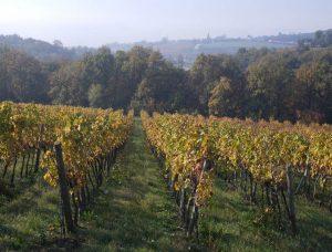 Nasce Rebellis, il nuovo vino da uve Solaris firmato Giannitessari