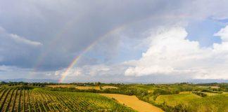 Superati i cinquant'anni, la Carpineto Vini è ormai una realtà internazionale di successo