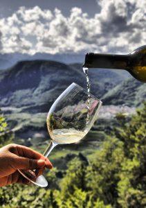 Al via da oggi in Val di Cembra la Rassegna Muller Thurgau