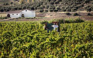 A Serdiana, nel basso Campidano, la nuova cantina dei vini di Antonella Corda