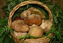 A Marcetelli, nel reatino, domenica saporita con la Festa del fungo porcino