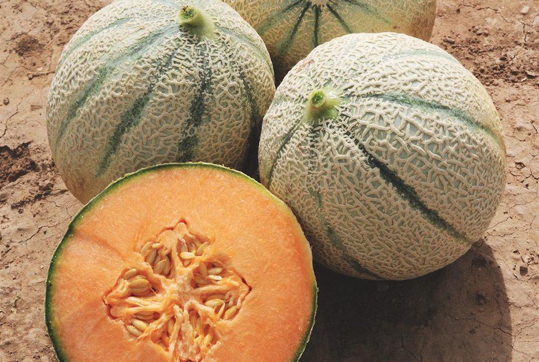 A Pescia Romana tre giorni di festa con il melone