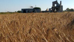 A Merine, in Salento, la Sagra te lu ranu, che celebra il grano e la vita contadina