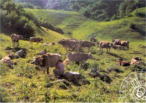 Prodotti tipici locali: il Formai de Mut dell'Alta Valle Brembana
