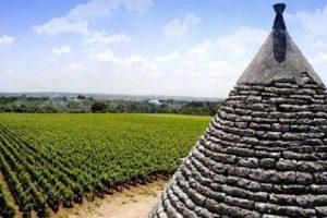 Primitivo di Manduria: cresce il Docg dolce naturale e il Riserva Dop