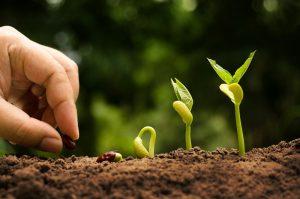 Dall' Agricoltura biologica cibo per molti o per pochi?