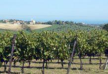 Tre giorni alla scoperta dei segreti dei migliori vini riminesi
