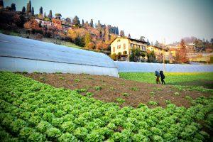 Prodotti tipici locali: la Scarola di Bergamo, prodotto in via d'estinzione