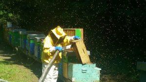 Energia dai Fiori, l'azienda romagnola che coccola le api