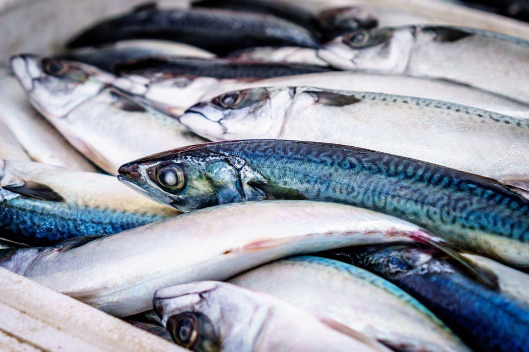 Prodotti tipici locali: la Saraghina, il pesce azzurro dell'Adriatico