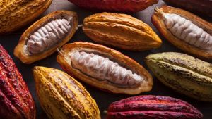 Perú, il gusto è nostro: il libro dedicato alla gastronomia peruviana