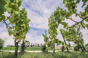Parte l'estate del Franciacorta Summer Festival on the road