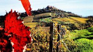 La Romagna dedica l'intero mese di giugno all'Albana