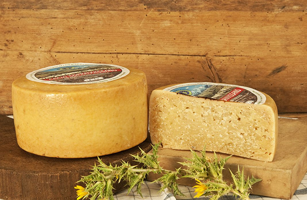 Prodotti tipici locali: il formaggio Vissano della montagna maceratese