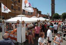 Medicipolla stand2