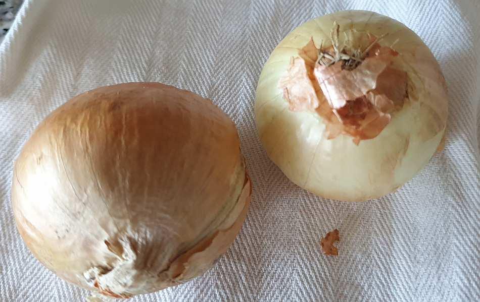 Friggione di Medicina - cipolla dorata