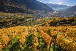 La vendemmia in Valtellina, una passeggiata tra i vigneti