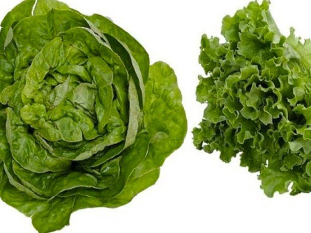 l'insalata di Lusia