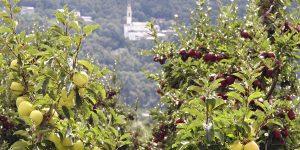 mele Valtellina