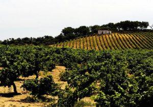 Portogallo Wine Destination