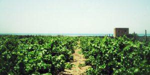 vinisperimMarsala vinoentali_Snapseed
