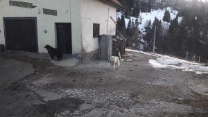Baloo e Franz, i cani del Melegnon